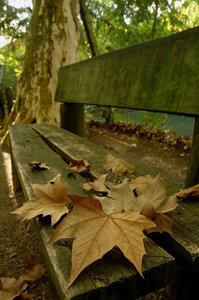 """""""As folhas do outono já cairam..."""""""